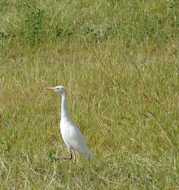 Egret-3